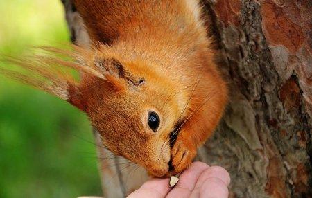 Белка песенки поёт и орешки всё грызёт…