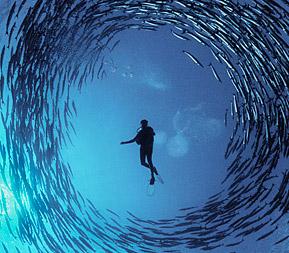 Шум человека убивает рыб