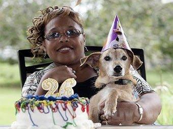 Самой старой собаке в мире исполнилось 26 лет