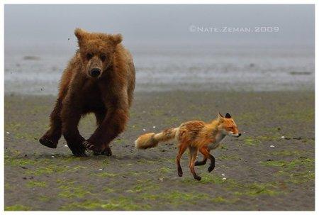 Живая природа от фотографа Nate Zeman