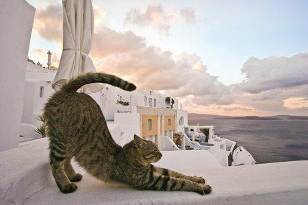 Асана по-кошачьи