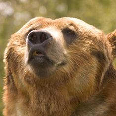 Медведь искусал туристов
