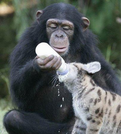 Малыш обезьянки