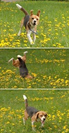 Смешной пёс