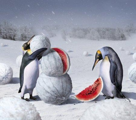 Снегови.. арбуз!