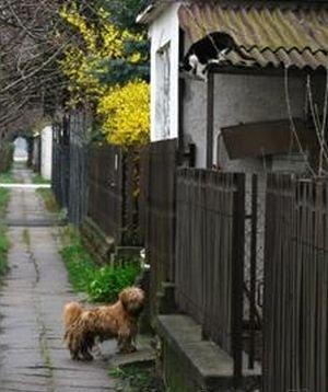 Два друга идут на прогулку