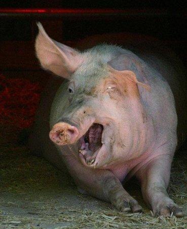 А ты сделал вакцину от свинного гриппа?:)