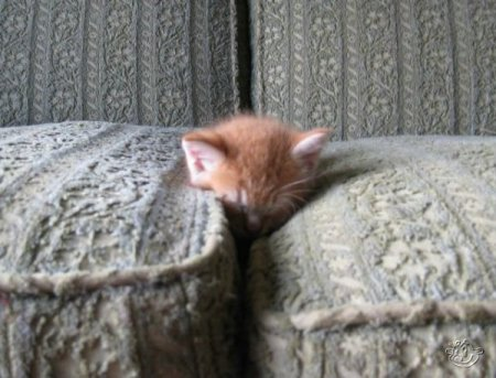 http://www.zooblog.ru/uploads/posts/2009-11/thumbs/1257875280_1257815335_animals_168_04.jpg