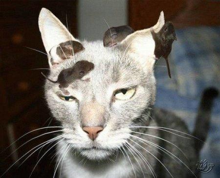 http://www.zooblog.ru/uploads/posts/2009-11/thumbs/1257875303_1257815406_animals_168_14.jpg