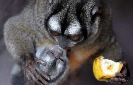 http://www.zooblog.ru/uploads/posts/2009-11/thumbs/1257875309_1257815333_animals_168_01.jpg