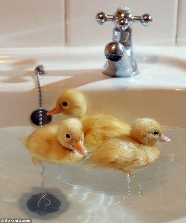 Уточки в ванной