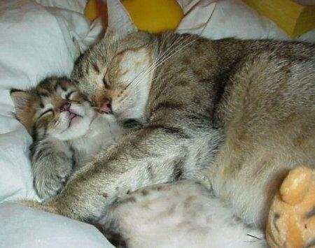 С мамой всегдя мягко и тепло :)