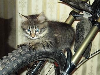 Что делают кошки в отсутствие хозяев?