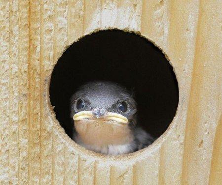 http://www.zooblog.ru/uploads/posts/2009-12/thumbs/1259773119_1259643133_picdump_97_30.jpg