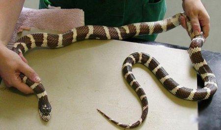 Глупая змея