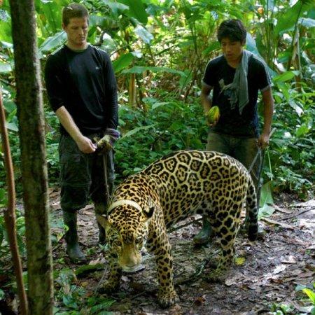 Прогулка с ягуарами