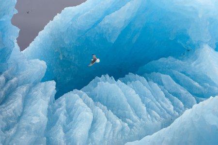 Полёт чайки над айсбергом