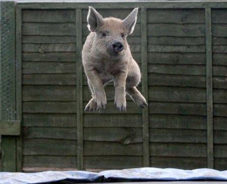Любительница прыжков на батуте
