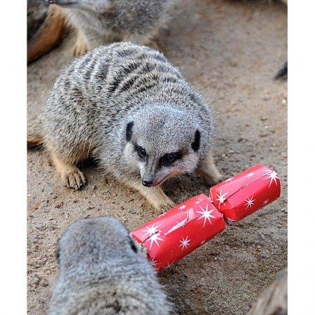 Рождество в зоопарке