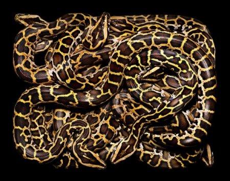 Змеи от Guido Mocafico