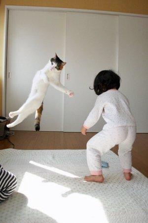 Коты не сдаются!