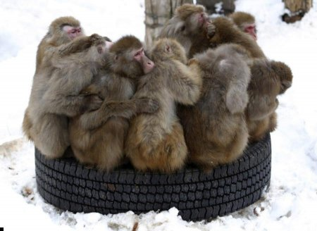 А мартышкам холодно!