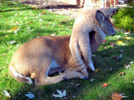 Игры кота с оленем