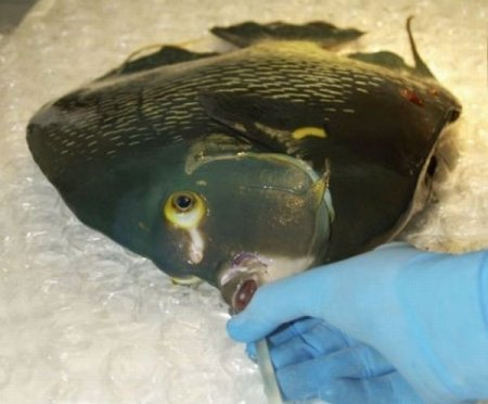 Спасение рыбки