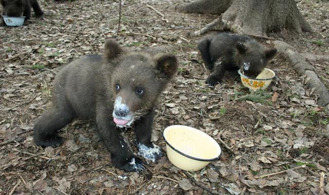 медвежата картинки: