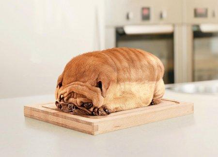 Хлебокот