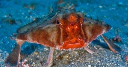 Рыба с красными губами