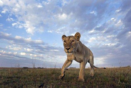 Охота на зебру