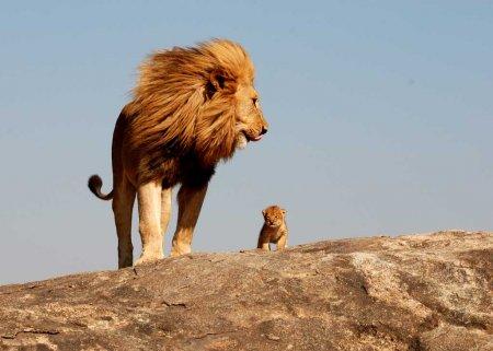 Кроха-сын и король-отец