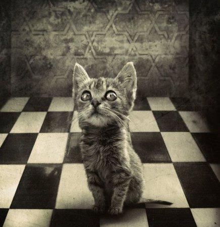 Шахматный котёнок