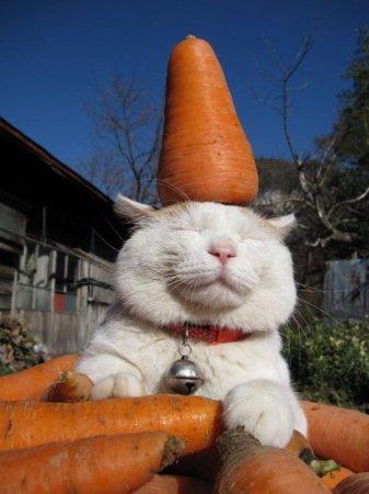 Колпак-морковка