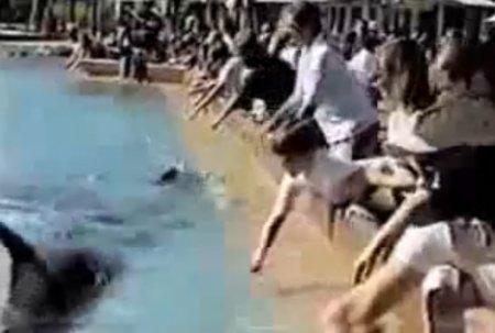 Невоспитанный дельфин