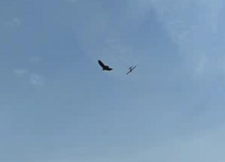 Орёл охотится за самолётом