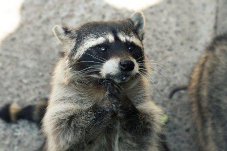 Господи, пошли мне немного печенья!