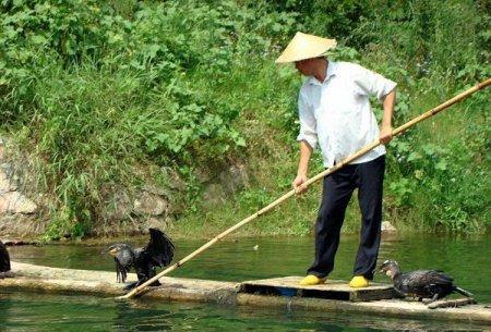 Рыбалка по-китайски