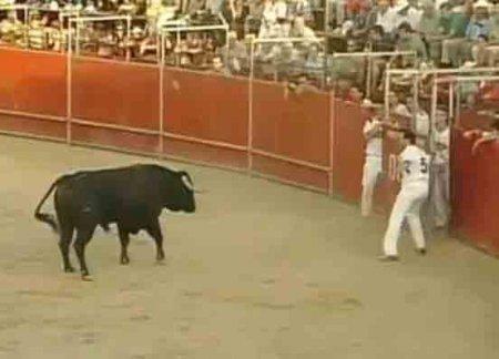 Торада с быками