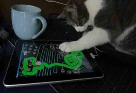 Кот изучает ipad