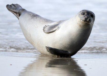 Спортивный тюлень