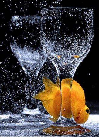 Рыбка в минералке