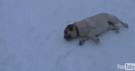 Собаки тоже любят кататься с горки
