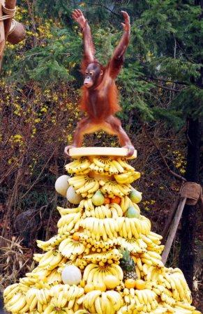 Властелин банановой горы