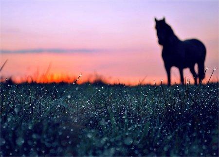 Лошадь на горизонте