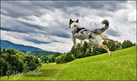 Летающий пёс