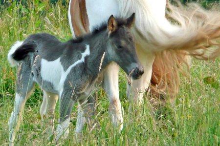 Малыш-лошадка