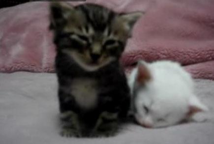 Сонные котята