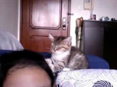 Котёнок-массажёр